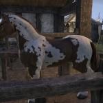 eso Draft Horse