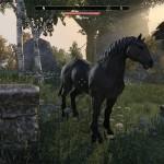 eso gaited horse