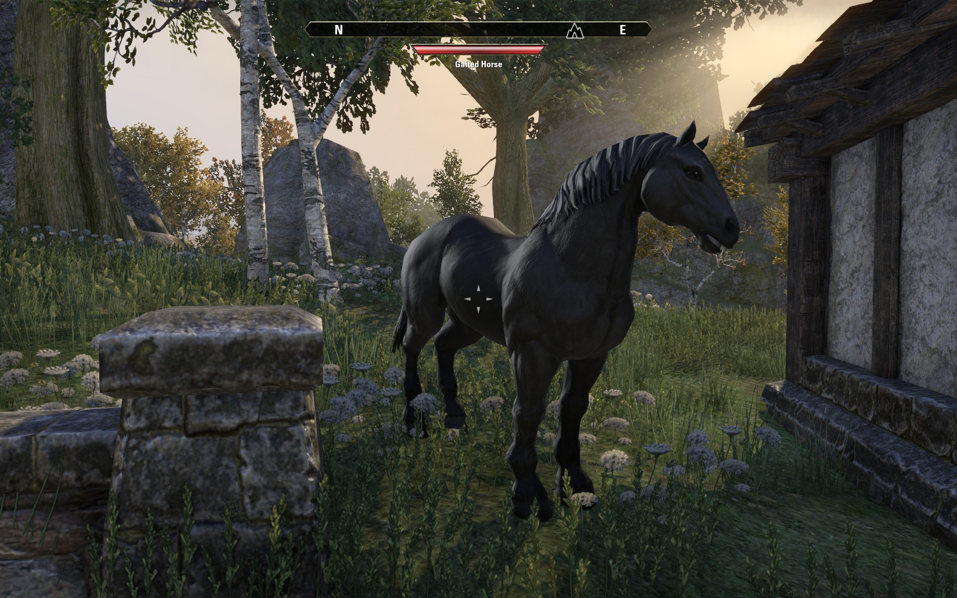 eso gaited horse